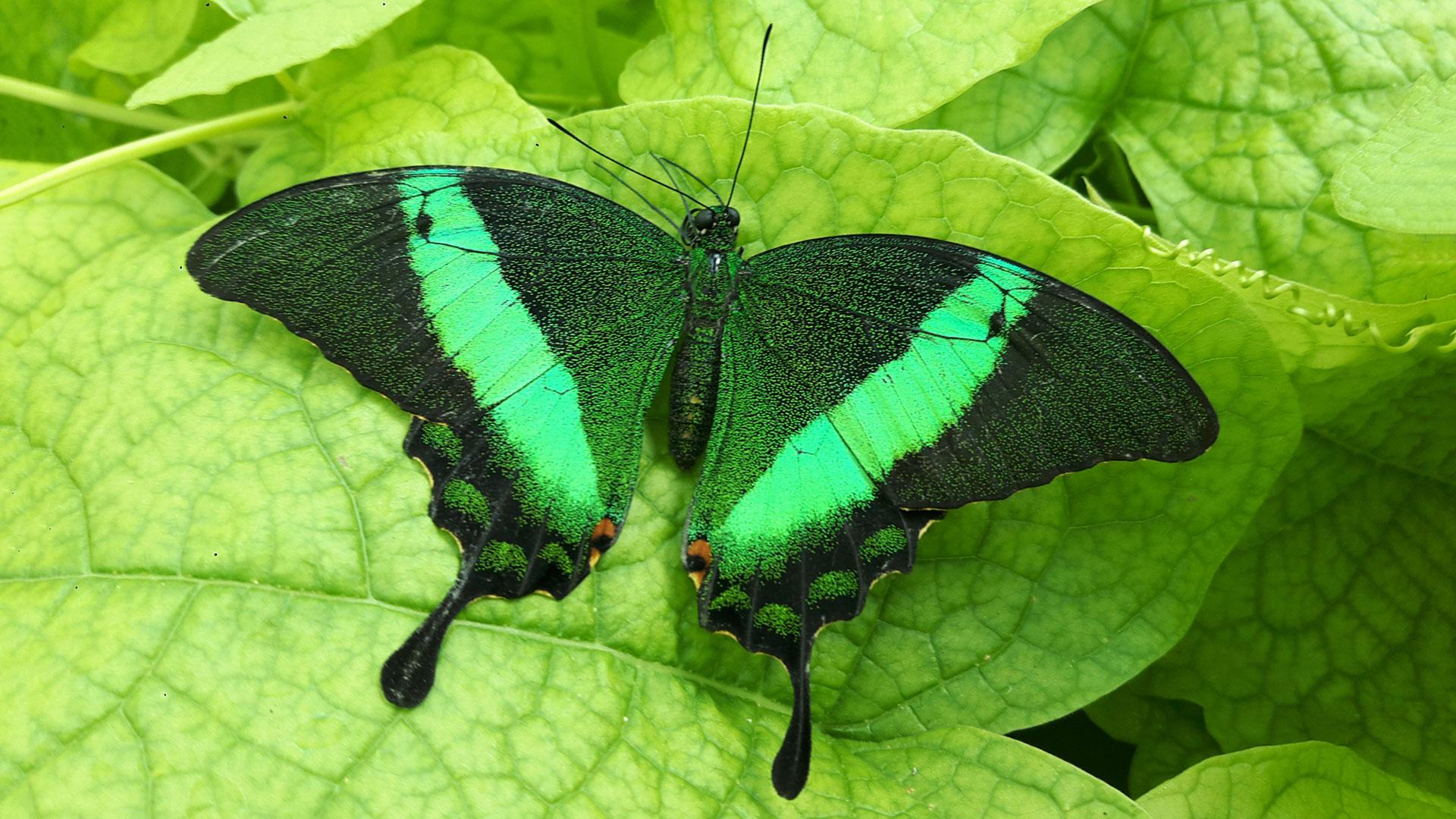 Konya butterfly garden